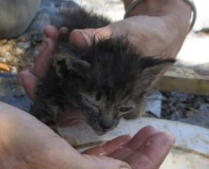 Des dizaines de chats errants et affamés secourus à Béziers