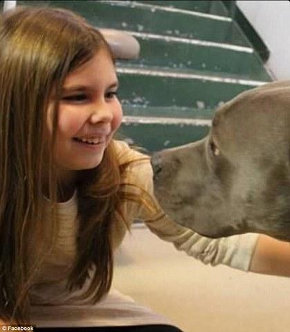Un Pit Bull devient chien de thérapie