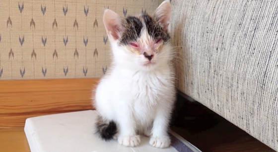 Une seconde chance pour Niko, un chaton orphelin privé de la vue