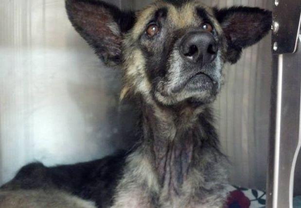 Une 2nde chance pour Joseph, un chien attaché à un arbre pendant 4 ans