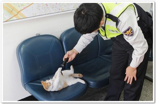 Deux chats intègrent la police de Séoul !
