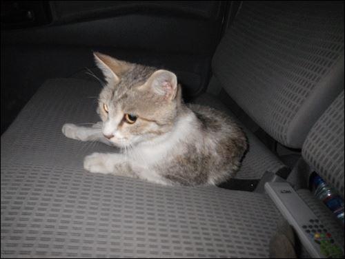 Mousetrap, le chat Afghan qui veut rejoindre son soldat