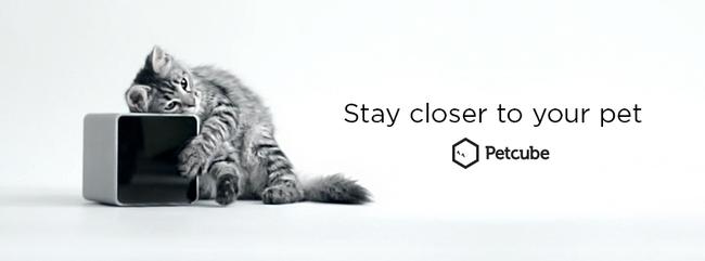 PetCube : rester proche de son chat, même quand on est loin