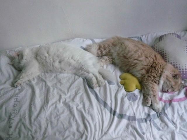 Kabouli Kats : offrir une seconde chance à des chats maltraités