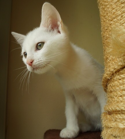 Portes ouvertes SPA : et si vous adoptiez l'animal de votre vie ce week-end ?