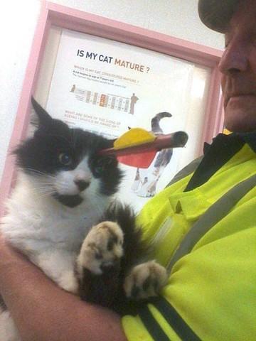 Moomoo, le chat miraculé transpercé par une flèche