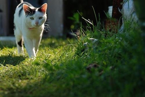 Les caresses, sources de stress chez le chat ?