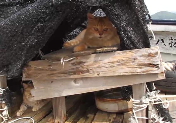 La vie rêvée de Chii et Dorami, 2 chats adoptés par des pêcheurs