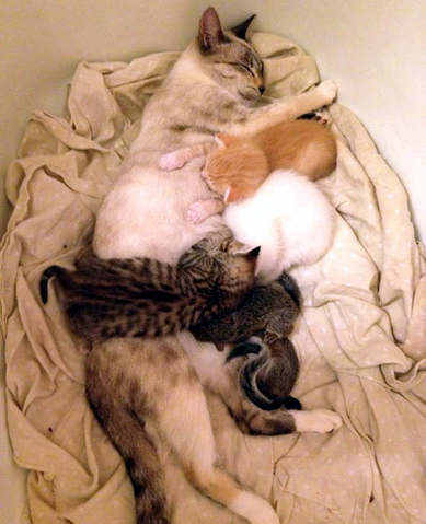 2 cureuils orphelins adopt s par une maman chat. Black Bedroom Furniture Sets. Home Design Ideas