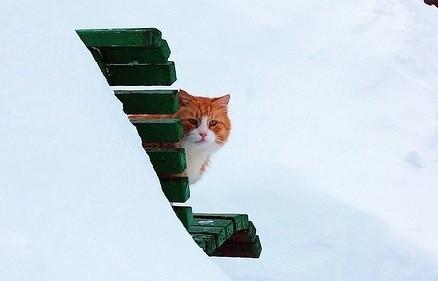 Le chat en hiver : 5 conseils pour son bien-être