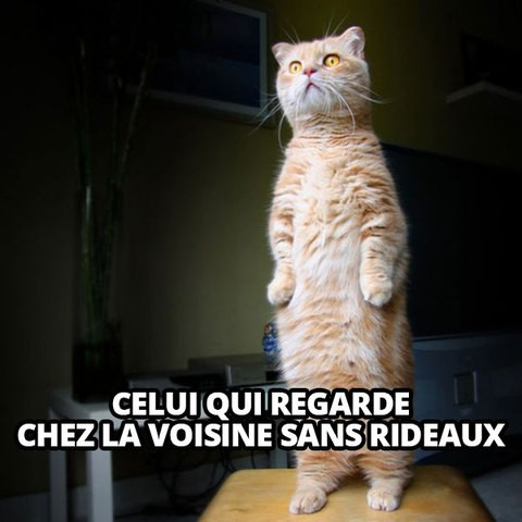chat mime, cat memes