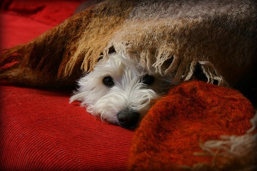 comment prot ger son chien du froid pendant l 39 hiver entretenir son chien wamiz. Black Bedroom Furniture Sets. Home Design Ideas
