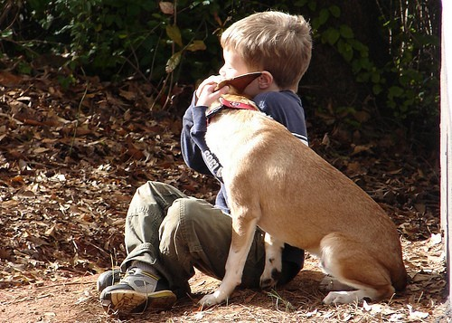 Dignami : accompagner les animaux de compagnie dans leur dernier voyage