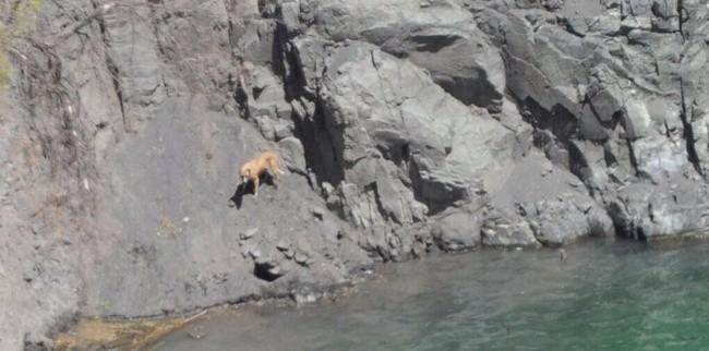le sauvetage d'un chien tombé dans un cratère de 200 mètres
