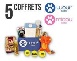 Wamiz vous offre plein de cadeaux pour fêter ses 4 ans !
