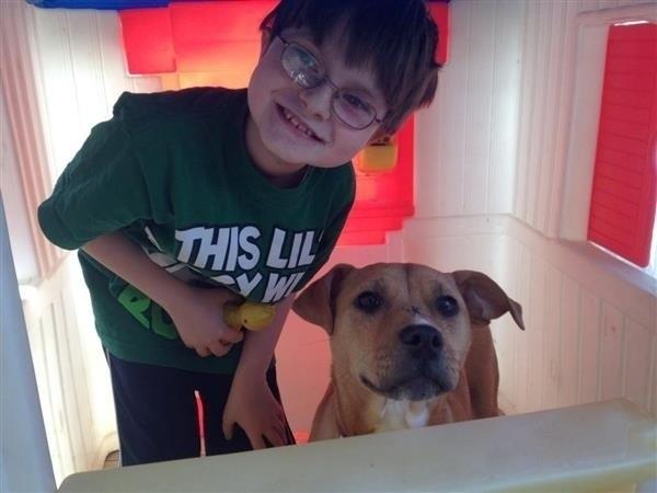 Xena et Koshka : une chienne miraculée et un chat salvateur élus animaux de l'année