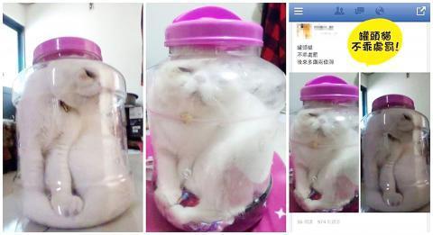 Elle enferme son chat dans un bocal pour le punir