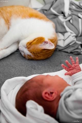 chat bébé