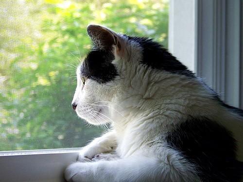 5 idées reçues sur les chats