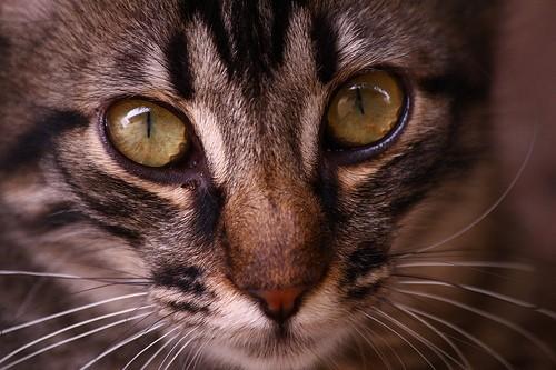 6 idées reçues sur les chats