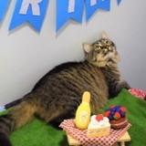 Le refuge organise l'anniversaire d'une chatte dont personne ne veut : pendant la fête, tout le monde est dévasté