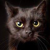 Opération Perle Noire : offrez une vraie seconde chance à des chiens et chats noirs