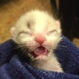 Un petit chat « kangourou » fait la plus belle rencontre de sa vie