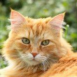 Disparu depuis 5 ans, ce chat a retrouvé ses humains et c'est très émouvant