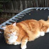 Faites connaissance avec Omar, le chat qui pourrait être le plus long au monde