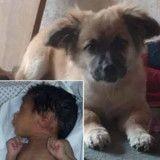 Ce chien a sauvé un nouveau-né abandonné dans un sac plastique