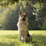 Un chien pendu à une laisse retrouvé dans une maison abandonnée