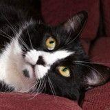 Comment va Adolphe, le chat touché par des tirs de carabine ?
