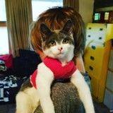 Mayim Bialik de The Big Bang Theory adopte un chat pas comme les autres