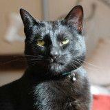 Découvrez l'annonce d'adoption complètement décalée de ce chat caractériel