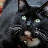 Ce chat errant a sauvé la vie d'un soldat au bord du suicide