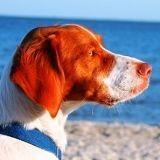 10 accessoires indispensables pour partir en vacances avec son chien