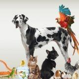 101 compagnons : des milliers d'animaux vous attendent ce week-end à Lille !