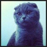 Disparu à l'aéroport de Montréal, le chat Chester réapparaît enfin