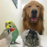 Le chien, le hamster et les 8 oiseaux : une famille incroyable (Photos)