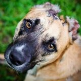 La bouleversante histoire de Susie, le chien héros de l'année