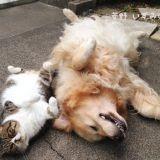 Oliver et Arashi, le chien et son meilleur le chat qui font craquer le web