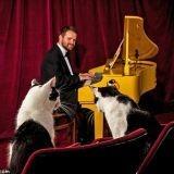 Voici le tout premier piano créé pour l'ouïe des chats... et contre la censure !