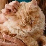 10 situations que tous les propriétaires de chat ont déjà vécues