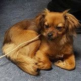 Une chienne perdue sur la ligne A du RER adoptée par un conducteur