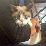 Un chat sauvé de l'incendie de la tour Grenfell à Londres réconforte tout le monde