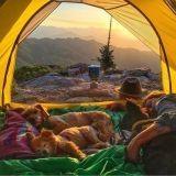 Ces photos vont vous donner envie une folle de partir à l'aventure avec votre chien !