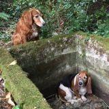 Un chien veille sur son amie en danger pendant une semaine !