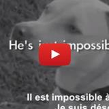 Les pires excuses de propriétaires qui décident d'abandonner leur chien (Vidéo du jour)