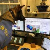Renvoyé de la police à cause de sa gentillesse, ce chien a trouvé un boulot de rêve