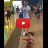 Après 3 ans de séparation, chien et maître se retrouvent… émouvant ! (Vidéo du jour)